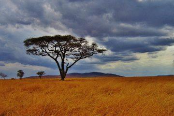 Tanzania vakantie